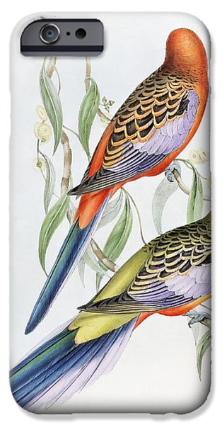 Ornithology iPhone Cases - Platycercus Adelaidae from the Birds of Australia iPhone Case by John Gould
