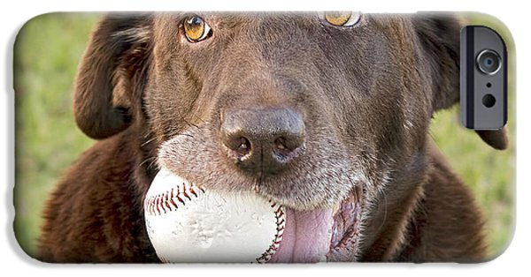 Chocolate Lab iPhone Cases - Play Ball? iPhone Case by Laura Greene