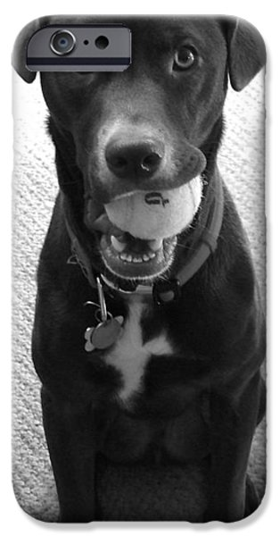 Dog And Tennis Ball iPhone Cases - Play Ball iPhone Case by Rita Mueller