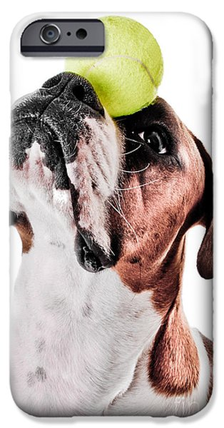 Dog Close-up iPhone Cases - Play Ball With Me iPhone Case by Jt PhotoDesign