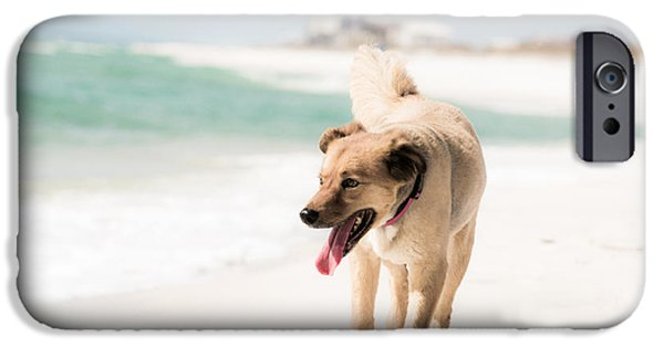 Dog iPhone Cases - Play Buddy iPhone Case by Shelby  Young