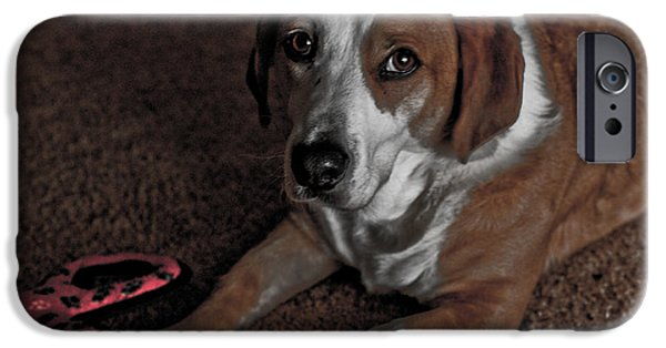 Dog And Toy iPhone Cases - Play With Me iPhone Case by Bonnie Bruno