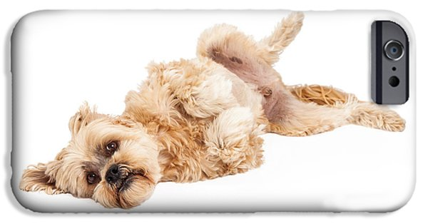 Action Shot iPhone Cases - Playful Maltese and Poodle Mix Dog Laying iPhone Case by Susan  Schmitz