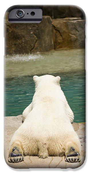 Playful Polar Bear iPhone Case by Adam Romanowicz