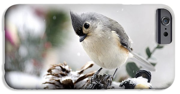 Titmouse iPhone Cases - Playful Winter Titmouse iPhone Case by Christina Rollo