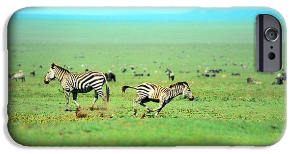 Savannah iPhone Cases - Playfull Zebras iPhone Case by Sebastian Musial