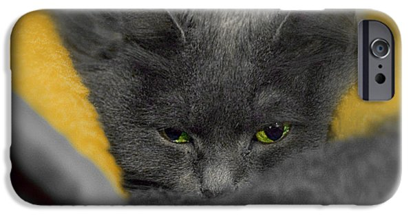 Gray Hair iPhone Cases - Playing Around iPhone Case by Joann Vitali