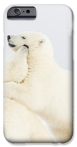 Wrestle iPhone Cases - Playing in the Snow iPhone Case by Tim Grams