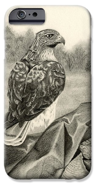 Meadow Drawings iPhone Cases - Pleasant Valley Red-tailed Hawk iPhone Case by Sarah Batalka