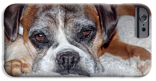 Boxer Photographs iPhone Cases - Please Let Me Stay By The Fire iPhone Case by Gill Billington