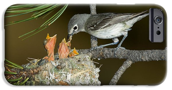 Feeds Chicks iPhone Cases - Plumbeous Vireo Feeding Chicks In Nest iPhone Case by Anthony Mercieca