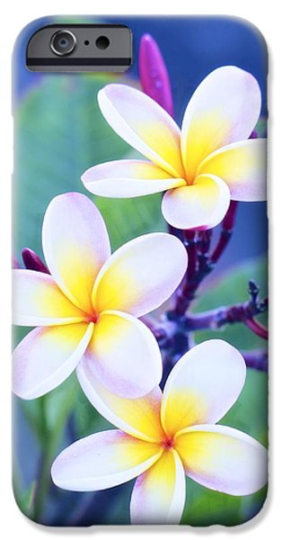 Floral Art iPhone Cases - Plumeria in Pastels iPhone Case by Jade Moon