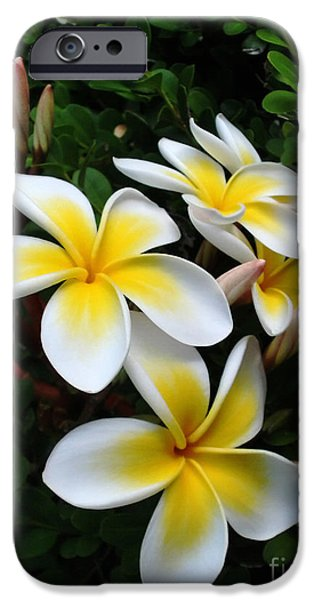 Sunlight On Flowers iPhone Cases - Plumeria in the Sunshine iPhone Case by Kaye Menner