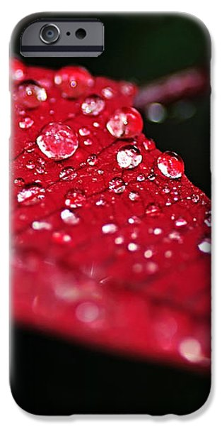 Poinsettia Leaf with Water Droplets iPhone Case by Kaye Menner