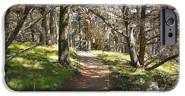 Point Lobos State iPhone Cases - Point Lobos Cypress Path iPhone Case by Jack Schultz
