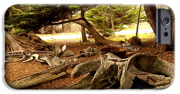 Point Lobos State iPhone Cases - Point Lobos Whalers Cove Whale Bones iPhone Case by Barbara Snyder