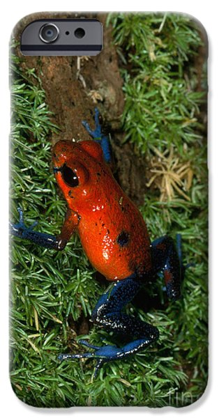 Frogs Photographs iPhone Cases - Poison-arrow Frog iPhone Case by Gregory G. Dimijian, M.D.
