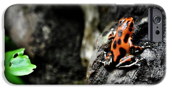 Smithsonian iPhone Cases - Poison Frog Beauty iPhone Case by Ryan A Lubit