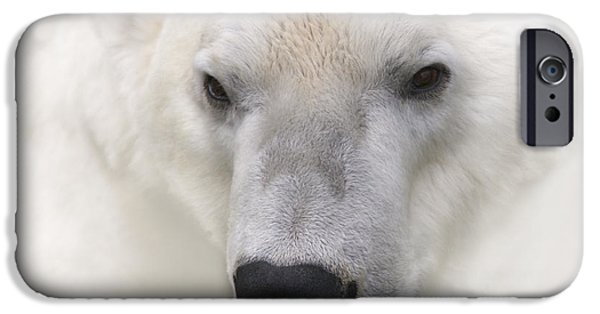 Biologic iPhone Cases - Polar Bear Portrait iPhone Case by Heiko Koehrer-Wagner