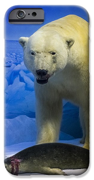 Museum iPhone Cases - Polar Bear vs. Seal iPhone Case by Bryan Scott