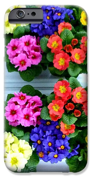 Polyanthus Primroses iPhone Case by Will Borden