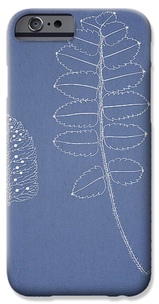 Polypodium Scottii iPhone Case by Aged Pixel