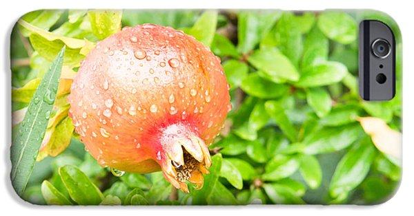 Pomegranate iPhone Cases - Pomegranate iPhone Case by Tom Gowanlock