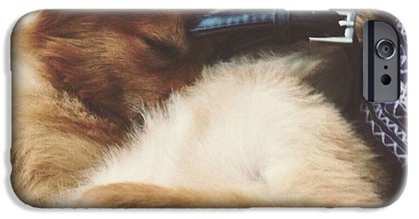 Puppy Love Framed Prints iPhone Cases - Pomeranian Dogs Cuddling iPhone Case by Tegan Jarvis