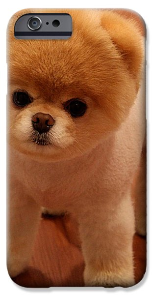 Dogs iPhone Cases - Pomeranian Puppy  iPhone Case by Marvin Blaine