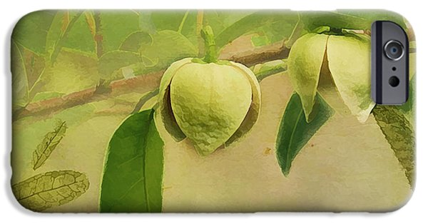 Annona iPhone Cases - Pond Apple iPhone Case by Grace Dillon