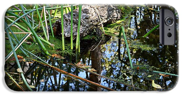 Nature Center Pond iPhone Cases - Pond iPhone Case by Christina Ochsner