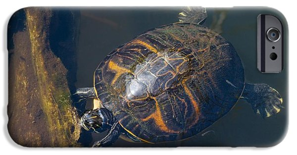 Slider Photographs iPhone Cases - Pond Slider Turtle iPhone Case by Rudy Umans