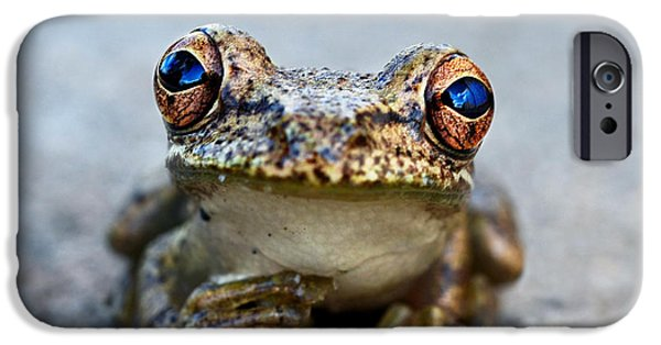 Laura Fasulo iPhone Cases - Pondering Frog iPhone Case by Laura  Fasulo