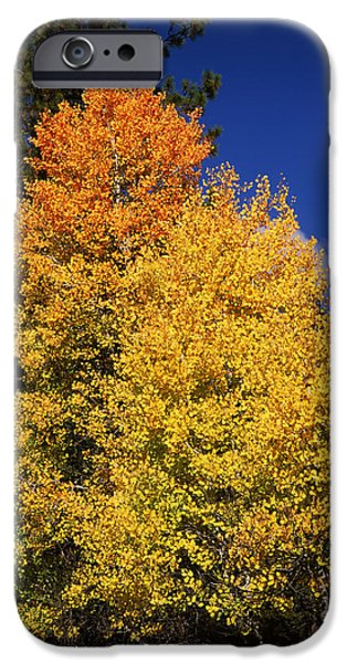 Fir Trees iPhone Cases - Ponderosa Pine With Aspen And Fir Trees iPhone Case by Panoramic Images