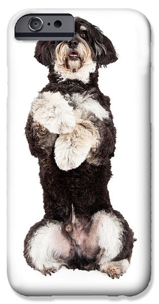 Animals Photographs iPhone Cases - Poodle Mix Breed Dog Begging iPhone Case by Susan  Schmitz