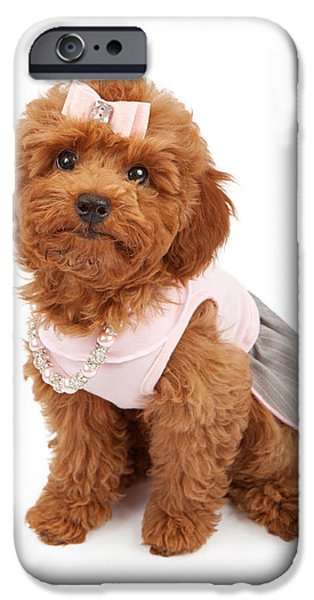 Little iPhone Cases - Poodle Puppy Wearing Pink Outfit iPhone Case by Susan  Schmitz