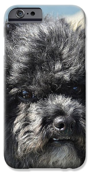 Poodle iPhone Case by Susan Leggett