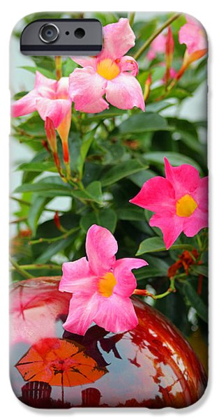 Nature Abstract iPhone Cases - Pool Side Flowers iPhone Case by Lorna Rogers Photography