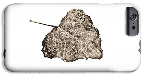 Fallen Leaf On Water iPhone Cases - Poplar Leaf Fade To Black and White iPhone Case by Greg Jackson