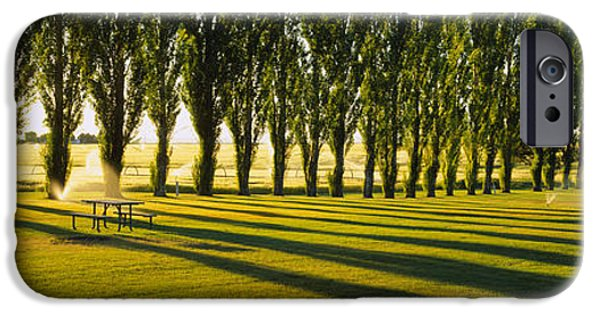 Repetition Photographs iPhone Cases - Poplar Trees Near A Wheat Field, Twin iPhone Case by Panoramic Images