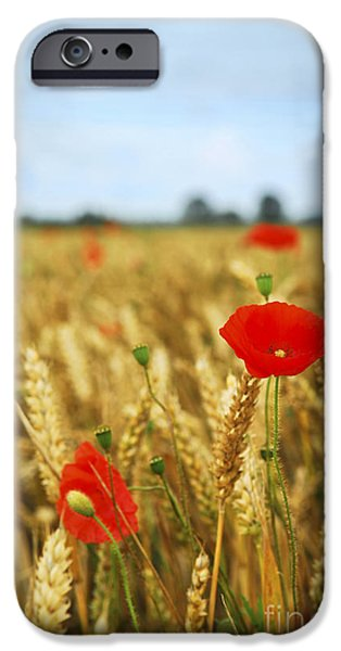 Crops iPhone Cases - Poppies in grain field iPhone Case by Elena Elisseeva