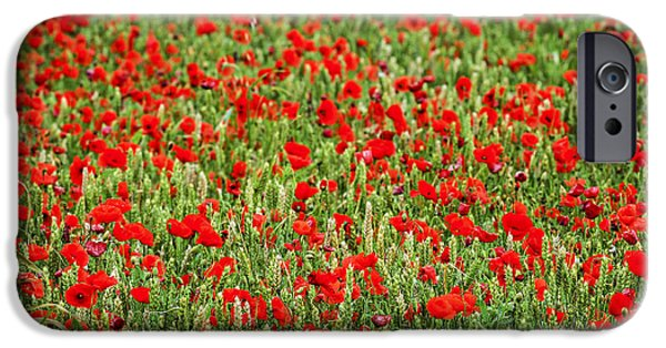 Crops iPhone Cases - Poppies in wheat iPhone Case by Elena Elisseeva