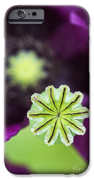 Poppy Abstract iPhone Case by Tim Gainey