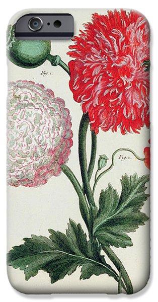 Botany iPhone Cases - Poppy iPhone Case by Basilius Besler