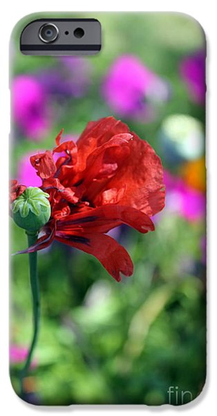 Drama iPhone Cases - Poppy flourish  iPhone Case by Renee Croushore