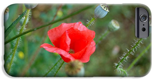 Detail iPhone Cases - Poppy flower iPhone Case by Gina Dsgn