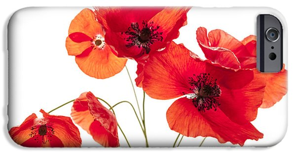 Cutout Photographs iPhone Cases - Poppy flowers  iPhone Case by Elena Elisseeva