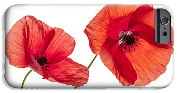 Cutout Photographs iPhone Cases - Poppy flowers on white iPhone Case by Elena Elisseeva