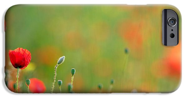 Bokeh iPhone Cases - Poppy Mood iPhone Case by Roeselien Raimond