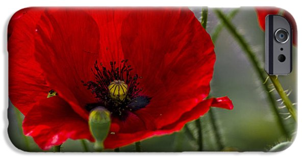 Meadow Photographs iPhone Cases - Poppy iPhone Case by Paul Howarth